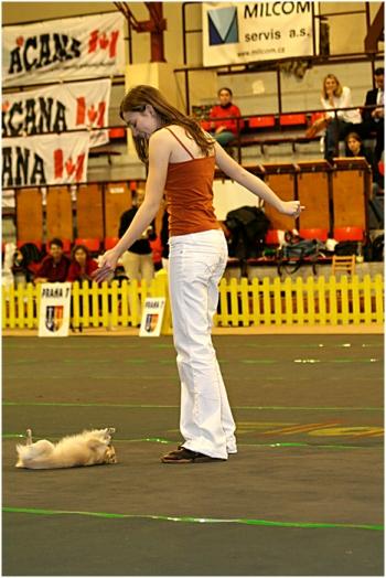 Tanec se psem-Dog dance