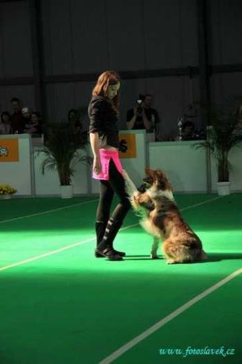 Tanec se psem - Dog dance